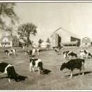 Ferme de Lucien Gosselin. Ce lot a été parmi les premiers à être défriché dans le canton par un certain Després. Située au début du canton, cette ferme a été photographiée en 1962 alors que son propriétaire Lucien Gosselin et Émérentienne furent les gagnants du deuxième prix au mérite agricole provincial. Aujourd'hui, elle est la propriété de Réal Marcoux.