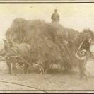 Deux adultes montent le foin sur la charge à l'aide d'une fourche et au bout des bras. Cette photo remonte en 1919 sur la ferme de Pierre Fortin.