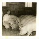 Sur la ferme, l'élevage du porc permettait aux familles d'avoir une nourriture riche et variée. Voici Donat Magnan faisant la promotion de la moulée Miracle et montrant quelques bêtes qu'il élevait.