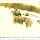 André et Rollande Willard s'occupent des moutons malgré leur bas âge. Nous apercevons en arrière des enfants un rouleau à neige qui servait à entretenir les chemins en 1942.