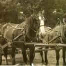 À la fin des années 40, nous voyons Pierre Denis sur sa voiture faisant du transport avec ses beaux chevaux.