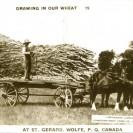 Voici une carte postale des années 1940 qui origine de St-Gérard, Wolfe, P.Q. Elle a été écrite en anglais. Cette photographie témoigne d'une récolte faite sur les terres des Domon.