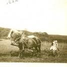 """Nous voyons deux enfants de la famille Hébert photographiés avec le """"team"""" de chevaux qui tirait la faucheuse. C'était en 1922."""